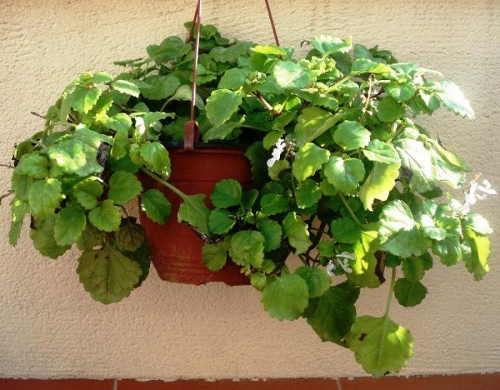 Feng shui 7 plantas para activar la riqueza tarot de mar a for Plantas para dormitorio feng shui